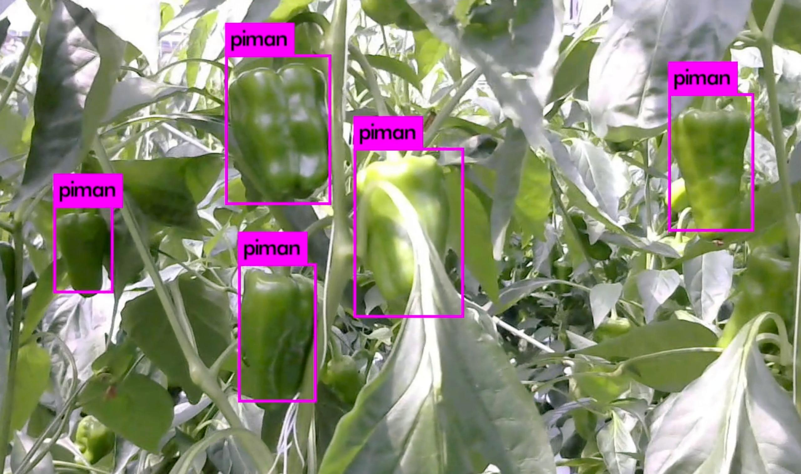 ロボットのカメラが農産物を認識する