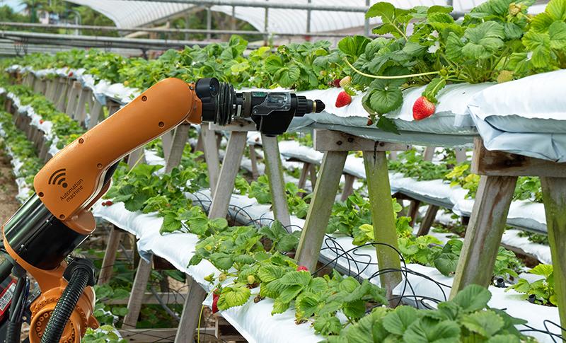 いちごの収穫を行うロボット